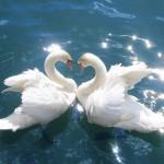 """Iubirea ca activitate şi investiţie. Fenomenul """"oglindirii"""" în iubire"""